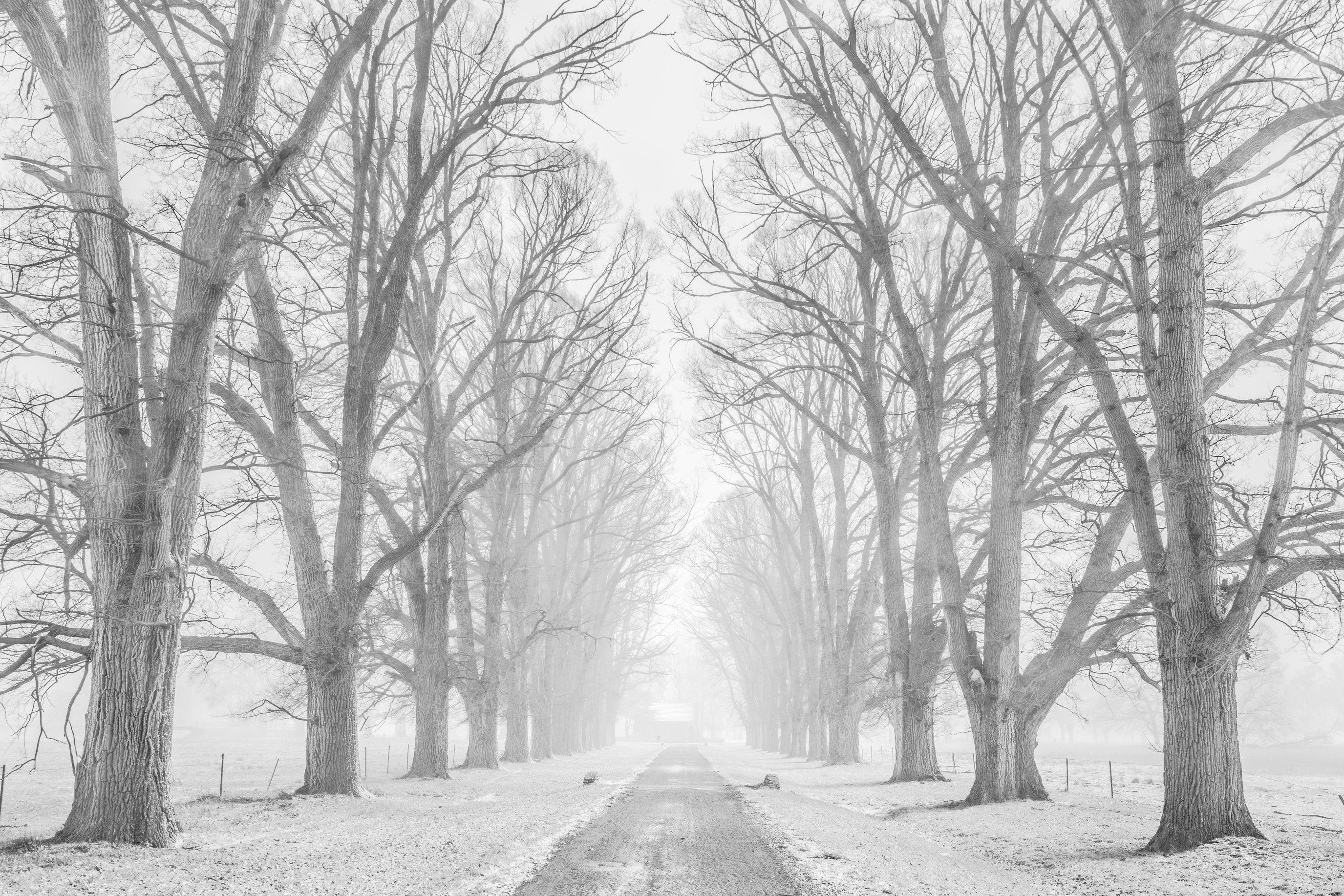 De stilte van de winter
